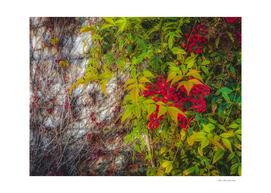 red seed plant with green leaves and cement wall background