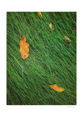green grass field background with dry brown leaves