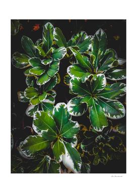 closeup green leaves plant garden texture background
