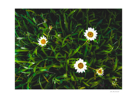 blooming white flowers with green leaves texture background