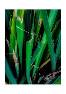 closeup green leaves texture