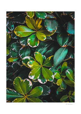 closeup green leaves texture background