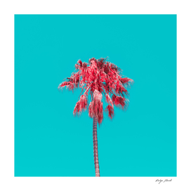 Orange palm