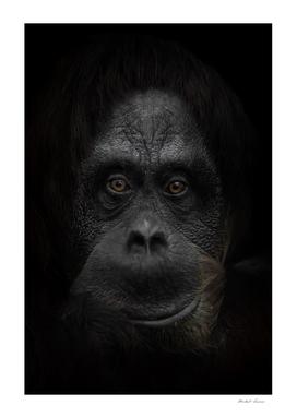 friendly orangutan face