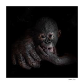 Cute little orangutan