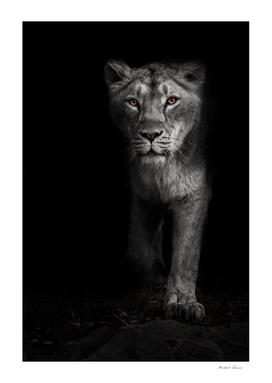 Ashen white, ashen moonlit night lioness in darkness