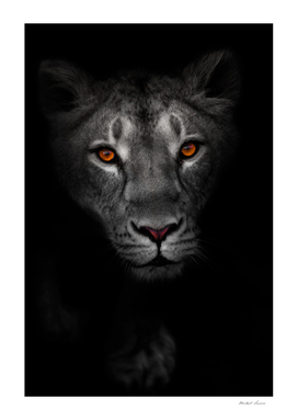 night portrait of a lioness