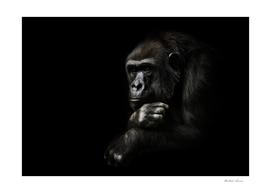 Monkey anthropoid gorilla female. a symbol of   rationality