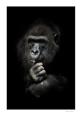 Monkey anthropoid gorilla female
