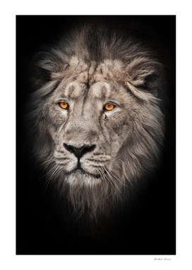 hair of a powerful male lion