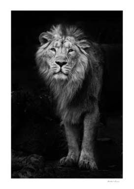 with a powerful male lion in night darkness,