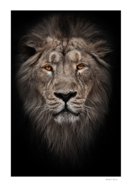 powerful male lion in night darkness