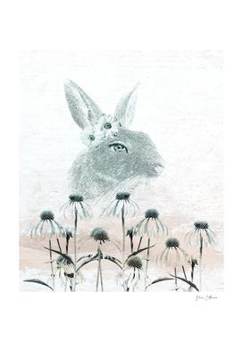 Bunny's Daisy Day