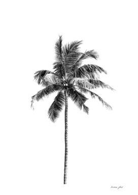 Palm tree by the beach