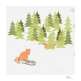 Winterfun- Sledging foxes in winter forest