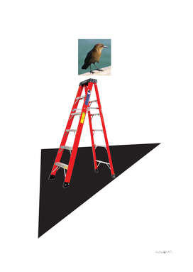 Bird on a Ladder
