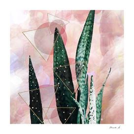 Plant circles & triangles