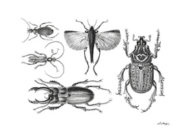 Vintage Bugs