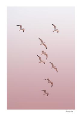Birds in the Pink Sky