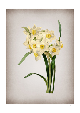 Vintage Bunch Flowered Daffodil Botanical on Parchmen