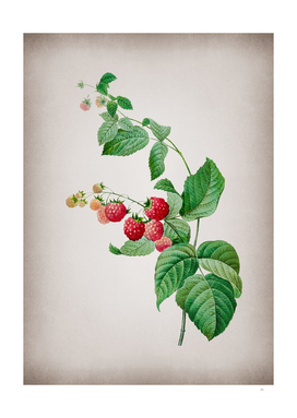 Vintage Red Berries Botanical on Parchment