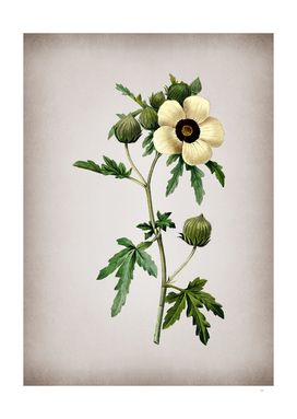 Vintage Venice Mallow Botanical on Parchment