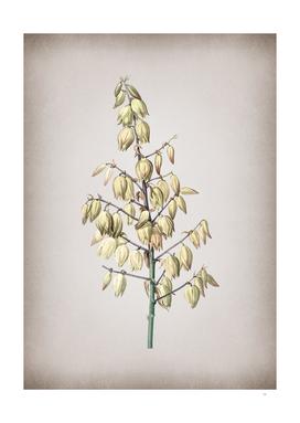 Vintage Adam's Needle Botanical on Parchment