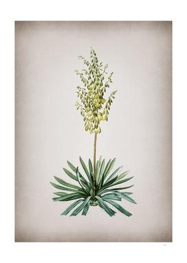 Vintage Adam's Needle 2 Botanical on Parchment