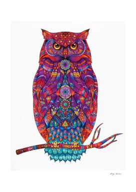 Illustration owl
