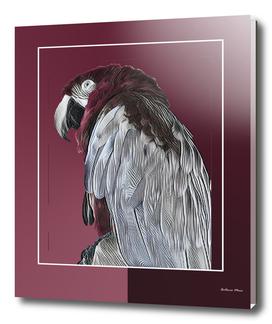 Dom Papagaio