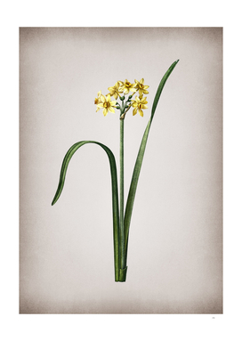 Vintage Cowslip Cupped Daffodil Botanical on Parchmen