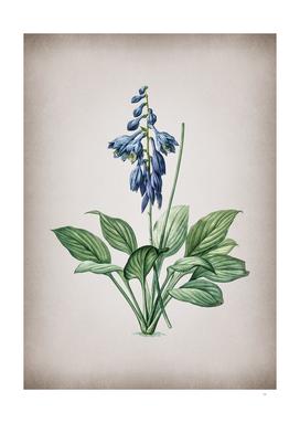 Vintage Daylily Botanical on Parchment