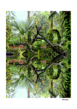 Singapore Botanical Garden 2 - Double Vision