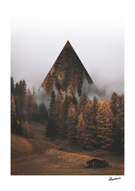Pine Trees Pathway
