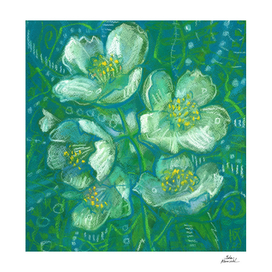 Jasmine, Summer Flowers, Decorative Floral