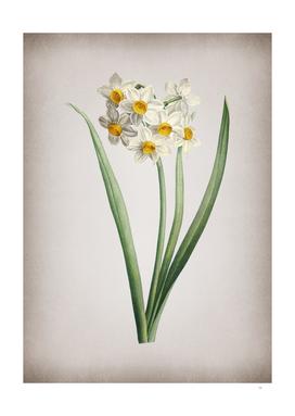 Vintage Narcissus Easter Flower Botanical on Parchmen