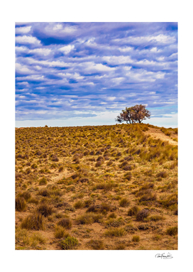 Patagonia Landscape Scene, Santa Cruz - Argentina
