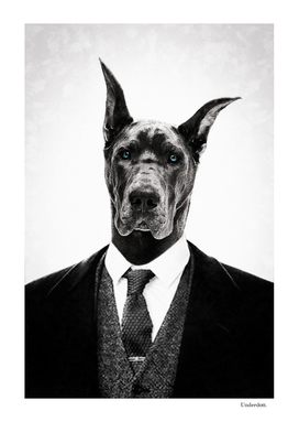Black dog portrait ...