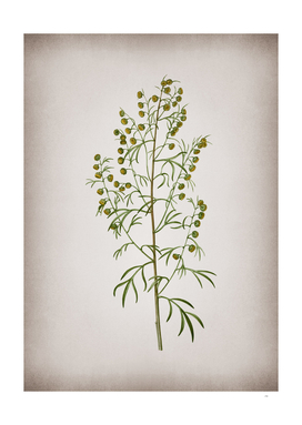 Vintage Madeira Wormwood Botanical on Parchment