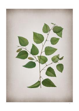 Vintage Paper Birch Botanical on Parchment