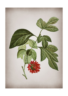 Vintage Paper Mulberry Flower Botanical on Parchment