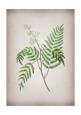 Vintage Peruvian Pepper Botanical on Parchment