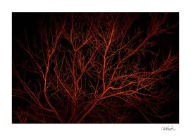 Dark Night Scene Forest Landscape