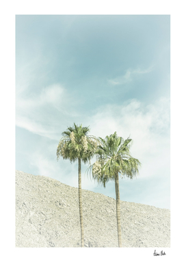 Palm Trees in the desert | Vintage