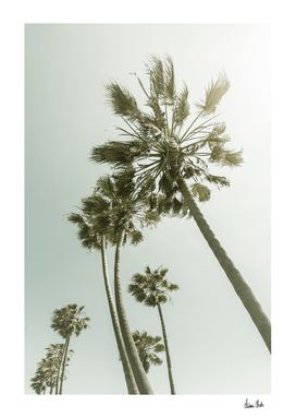 Vintage Palm Trees in the sun