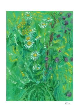 July Wildflowers, Meadow Flowers, Summer Floral