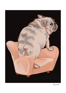frenchie bulldog in an armchair
