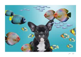tropic fishes french bulldog underwater
