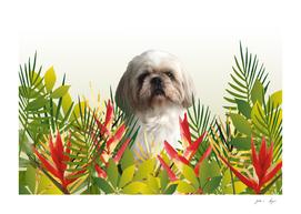 Shih tzu dog jungle Leaves heliconia