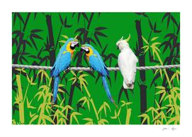 Bamboo Macaw Parrots Bird